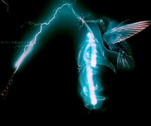hummingbird, patronus, and potter image