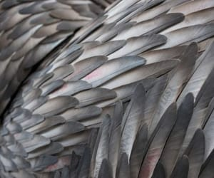 feathers and wings image