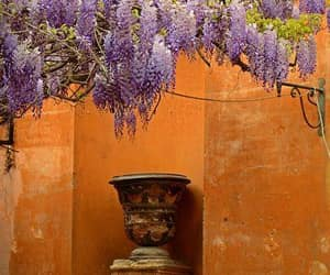 roman and wisteria image