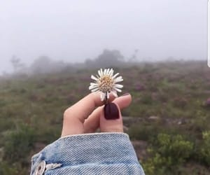 flower, girl, and hand image