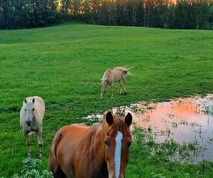 Animales, caballos, and libertad image