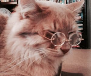 cat, animal, and glasses image