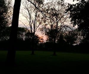 beautiful, orange, and park image