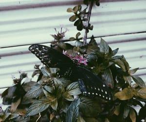 beauty, dark, and black image