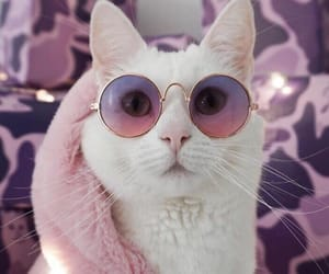 cat, pink, and cool image