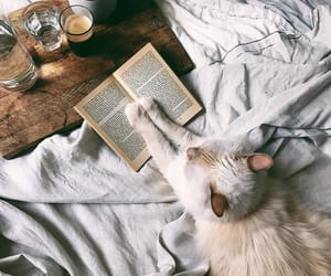 animals, books, and cats image