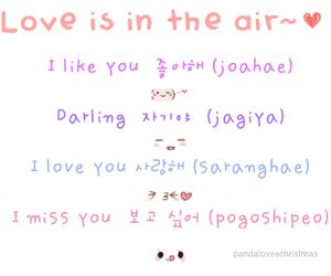 korean, love, and kpop image
