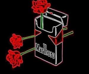 rose, wallpaper, and cigarette image