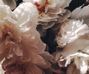 blossom, bouquet, and fashion image
