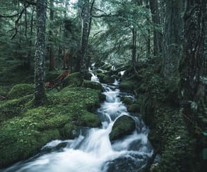 beauty, forest, and green image