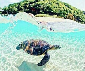 turtle, 🌊, and 🌞 image
