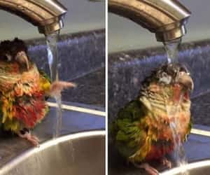 adorable, cute bird, and funny animal image
