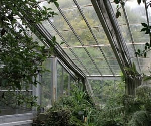 aesthetic, green, and greenhouse image