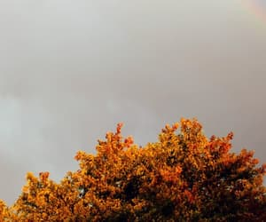 autumn, fall, and header image