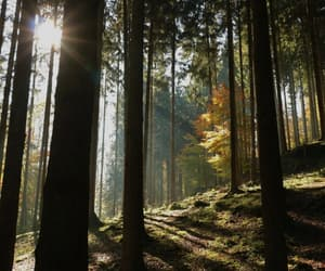 beautiful, forest, and germany image
