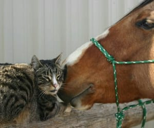 cats, horse, and pets image
