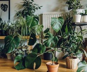 home decor, interior, and jungle image