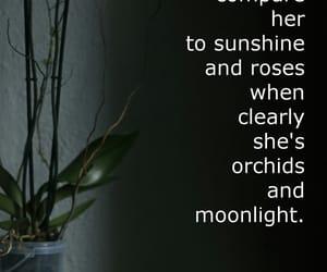 dark, orchidea, and moonlight image
