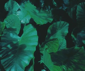 dark, plants, and green image