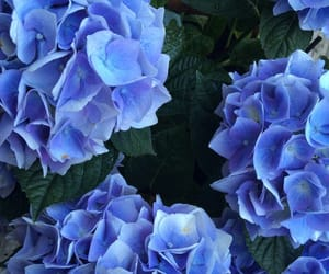 beautiful, nature, and blue image