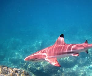 pink, shark, and ocean image