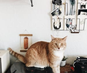 animals, decor, and pets image