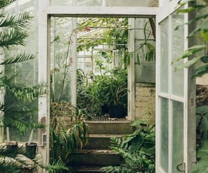 Arhitecture, garden, and plant image