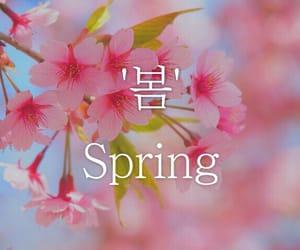 korea, korean, and pink image