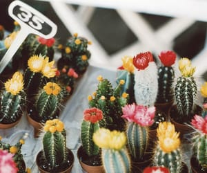 cactus, flowers, and plants image