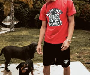 boys, dog, and Hot image