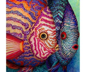 animals, fishes, and colorful. sea image