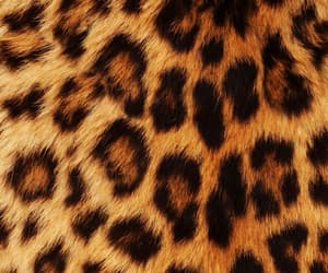 wallpaper, leopard, and animal image