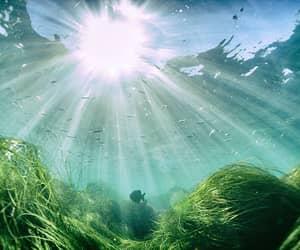 Красивые рыбы в море с солнце света от поверхности стоковое фото