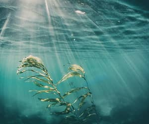 nature, underwater, and water image