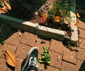 aesthetic, flower, and vans image