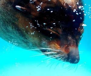 animal, aquarium, and aquario image