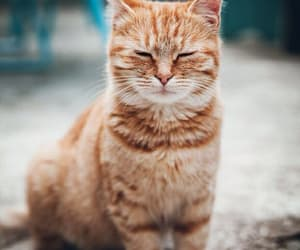 animal, cat, and ginger image