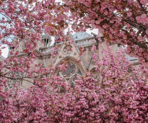 flowers, places, and pink image