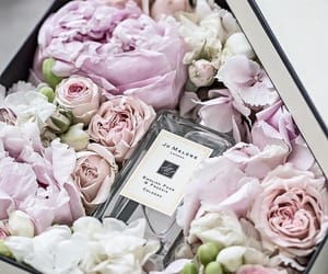 flowers, roses, and jo malone image