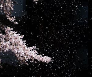 night, sakura, and japan image