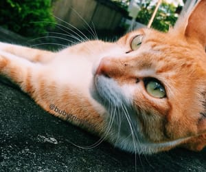 cat, ginger, and green eyes image