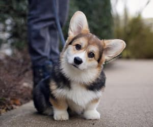 dog, adorable, and animals image