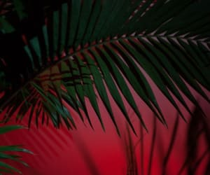 red, plants, and wallpaper image