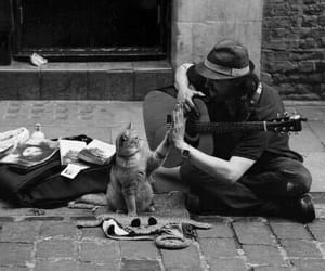 guitar, cat, and street image