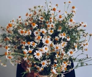 daisies, flowers, and goals image