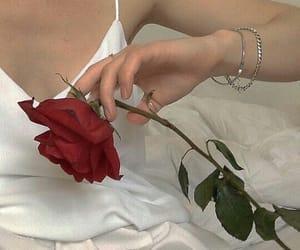 fashion, rose, and white image