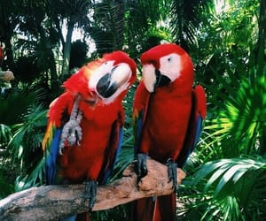 nature, parrots, and red image