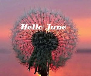 june, hello, and season image