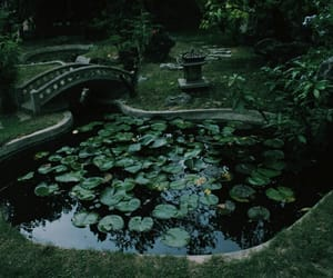 green, nature, and dark image