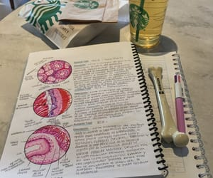anatomy, books, and colorful image